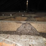 Large piles of bat droppings are a hazard to anyone living in the home.