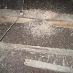 Bat guano in attic will accumulate to large piles.