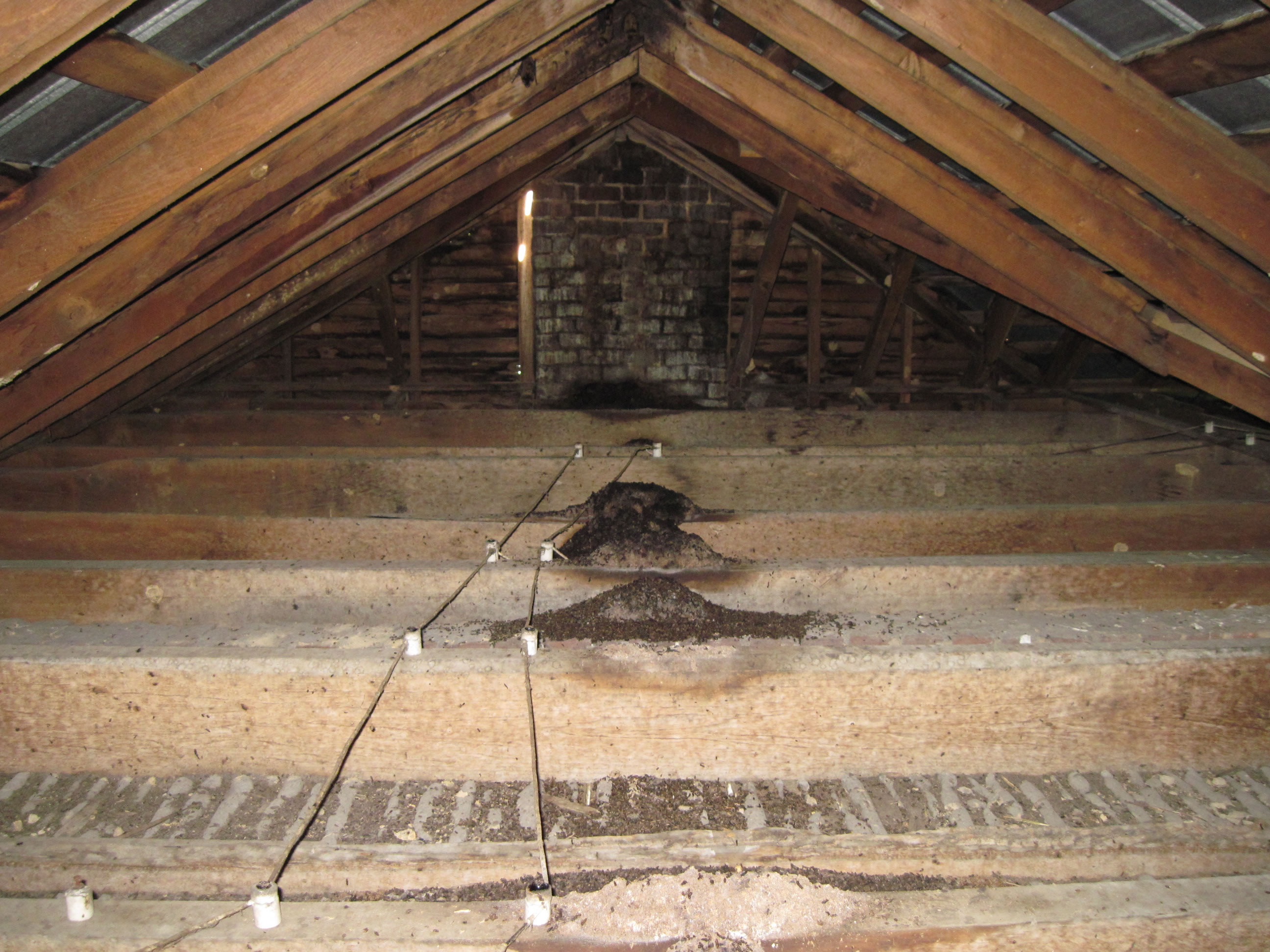 bat infested attic has bad bat problem that needs to be cleaned out
